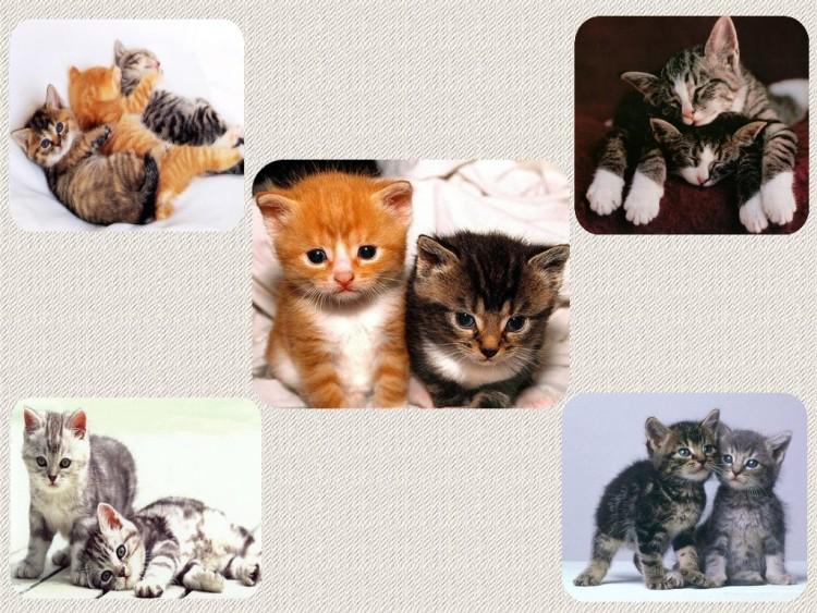 fonds d 39 cran animaux fonds d 39 cran chats chatons mignons chatons par linoune. Black Bedroom Furniture Sets. Home Design Ideas