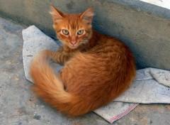 Fonds d'écran Animaux chaton rouquin