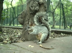 Fonds d'écran Animaux Écureuil mexicaine