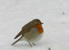 Fonds d'écran Animaux Dur dur l'hiver