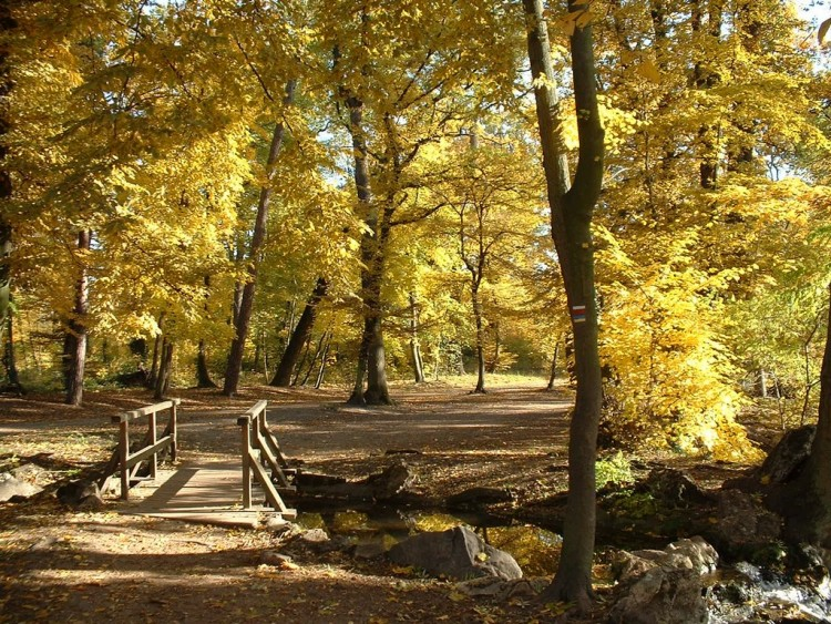 foto de Wallpapers Nature > Wallpapers Seasons - Fall L'automne au bois de ...