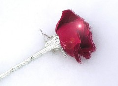 Fonds d'écran Art - Numérique au nom de la rose