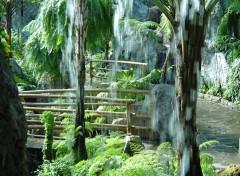 Fonds d'écran Nature arbre