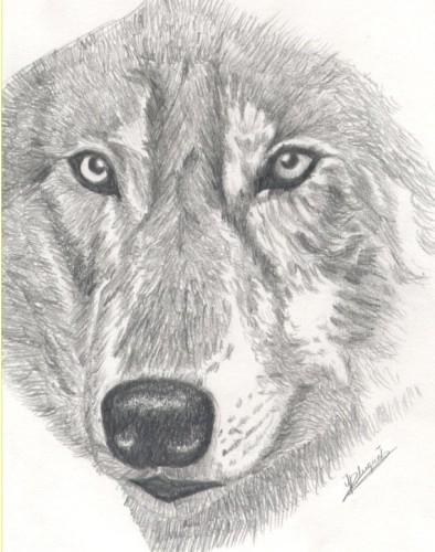 Fonds D Ecran Art Crayon Fonds D Ecran Animaux Loups Tete De