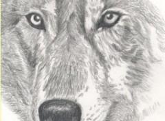 Fonds d'écran Art - Crayon Tête de loup