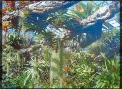 Fonds d'écran Nature plante