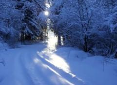 Fonds d'écran Nature hiver 2004-2005