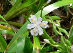 Fonds d'écran Nature Fleur.