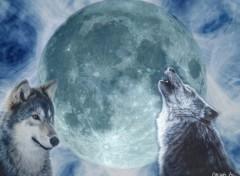 Fonds d'écran Animaux Les loups