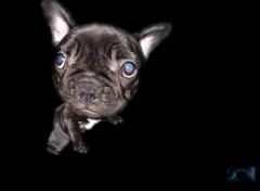 Fonds d'écran Animaux le chien a la grosse tête