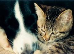 Fonds d'écran Animaux Comme chiens et chats