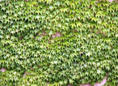 Fonds d'écran Nature Green Wall