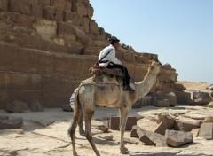 Wallpapers Trips : Africa La police montée aux pyramides ...