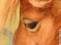 Fonds d'écran Animaux Frimousse de poney attendrissante