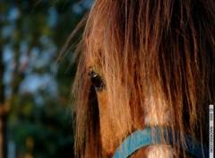 Fonds d'écran Animaux Demi-tête de cheval