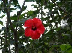 Fonds d'écran Nature Fleur des tropiques