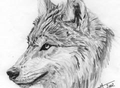 Wallpapers Art - Pencil Loup