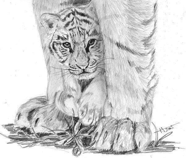 Wallpapers Art - Pencil Animals - Felines Jeune tigre et sa mère