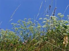 Fonds d'écran Nature Herbes folles...