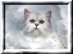 Fonds d'écran Animaux Le chat