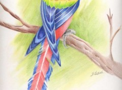 Fonds d'écran Art - Crayon Perroquet