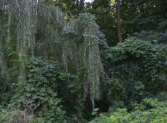 Fonds d'écran Nature parc angrignon2