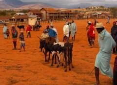Fonds d'écran Voyages : Afrique Ambalavao, le marché aux Zébus
