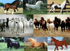 Fonds D Ecran Chevaux Categorie Wallpaper Animaux Hebus Com