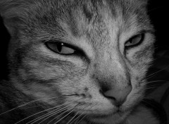 Wallpapers Animals Portrait de chat