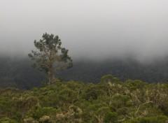 Fonds d'écran Voyages : Afrique Montagne dans la brume au Cirque de Cilaos