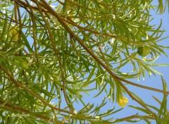 Fonds d'écran Nature sous l'arbre