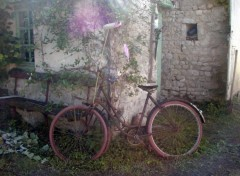 Fonds d'écran Transports divers Un  joli vélo