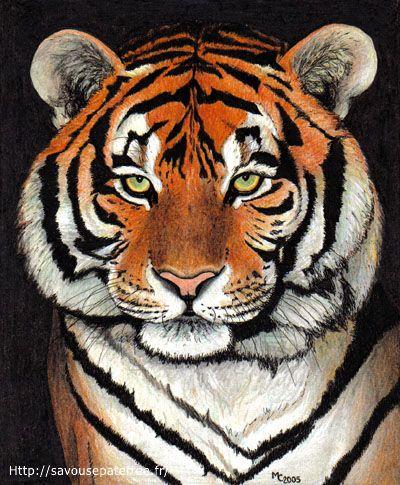 Wallpapers Art - Pencil Animals - Felines Tigre de Sibérie