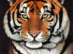 Wallpapers Art - Pencil Tigre de Sibérie