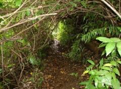Fonds d'écran Nature passage sous les branches