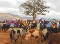 Wallpapers Trips : Africa Au marché aux zébus d'Ambalavao