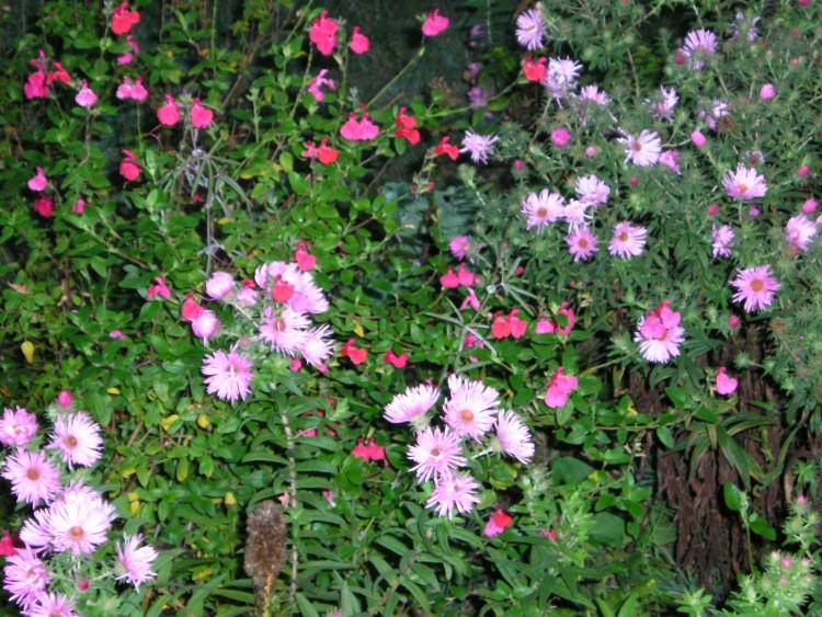 Buisson Fleuri Chou Fleur Jaune Maison Retraite Champfleuri
