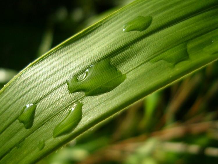Fonds d'écran Nature Feuilles - Feuillages Aprés la pluie...