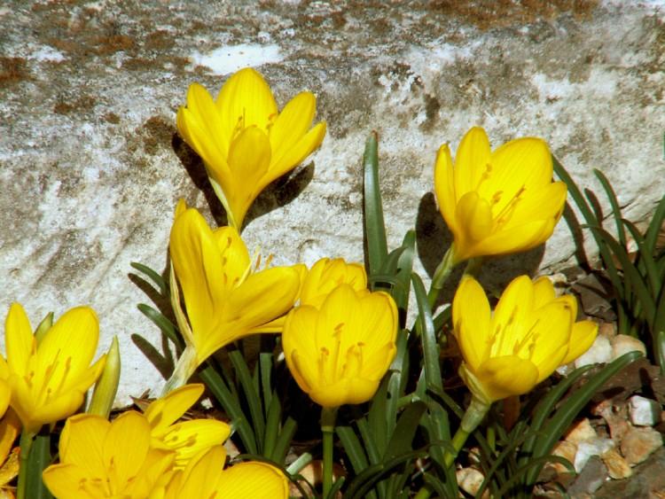 Fonds D Ecran Nature Fonds D Ecran Fleurs Fleurs D Automne Par Berty Hebus Com