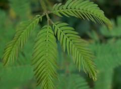 Fonds d'écran Nature Chlorophylle 7