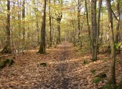 Fonds d'écran Nature Manteau d'automne