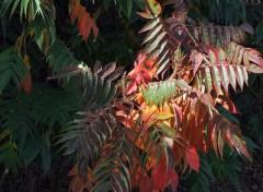 Fonds d'écran Nature Parure d'automne...