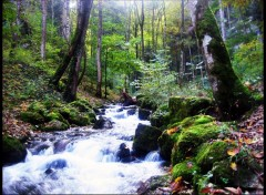 Fonds d'écran Nature Image sans titre N°121739