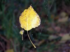 Fonds d'écran Nature Feuilles d'automne envolées par le vent...