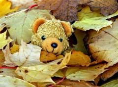Fonds d'écran Objets Petit Ours d'automne...