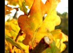 Fonds d'écran Nature Feuilles d'automne...