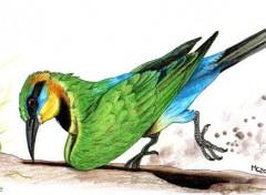 Fonds d'écran Art - Crayon Guêpier arc-en-ciel