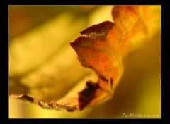 Fonds d'écran Nature Feuille d'automne