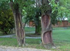 Fonds d'écran Nature Cuba, les arbres sculptés ...