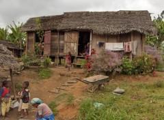 Fonds d'écran Voyages : Afrique Sur la route d'Andasibé aux Pangalanes